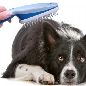 Ionic Pet Brush