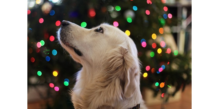 THE TOP 3 NEW YEAR RESOLUTIONS FOR PET OWNERS